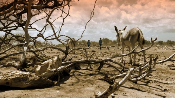KASITA donkeys